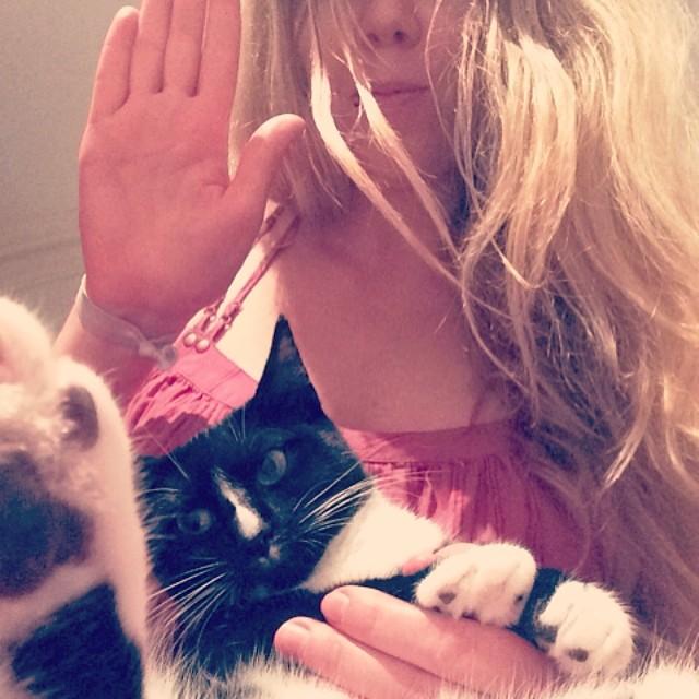 Котик смотрит на вас двумя руками.